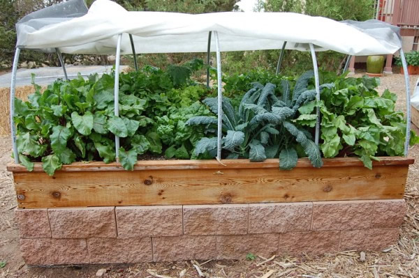 Raised Bed Garden in Santa Fe